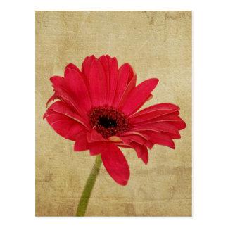 Postal roja de la flor del Gerbera