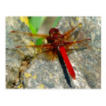 Postal roja de la foto del insecto de la libélula
