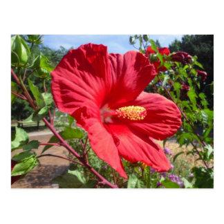 Postal roja de la macro del hibisco