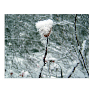 Postal roja nevada de las bayas 2