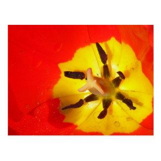 Postal roja y amarilla del detalle de la flor