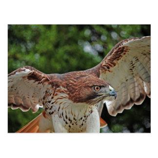 Postal Rojo-Atada del halcón 2