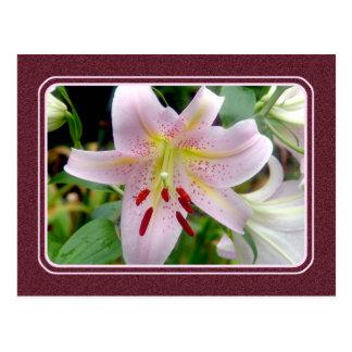 Postal rosada bonita de la flor del lirio