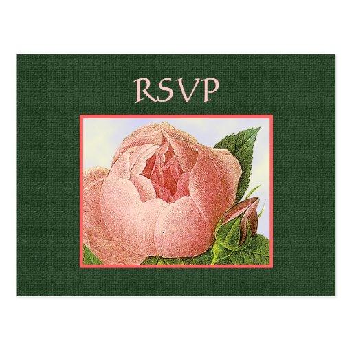 Postal rosada botánica de encargo de los rosas de