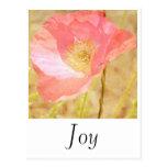 Postal rosada de la alegría de la amapola de Islan