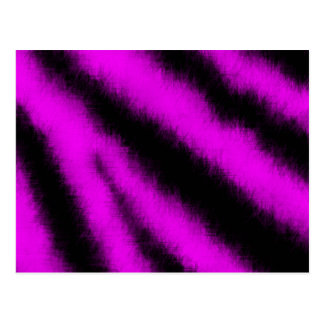 Postal rosada de la cebra