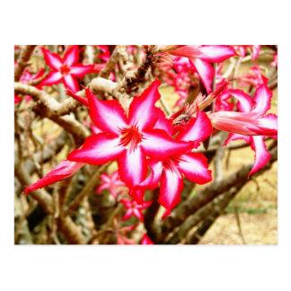 Postal rosada de la flor