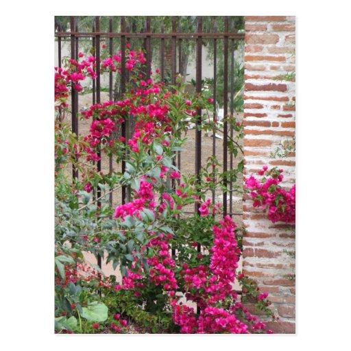 Postal rosada de las flores de Capistrano