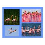 postal rosada de los flamencos