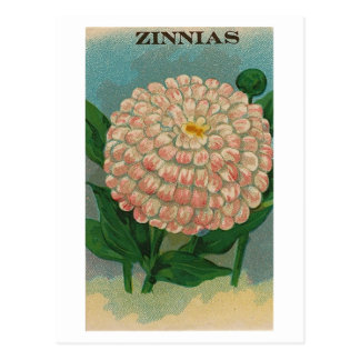 postal rosada del paquete de la semilla del zinnia