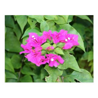 Postal rosada del racimo de flor