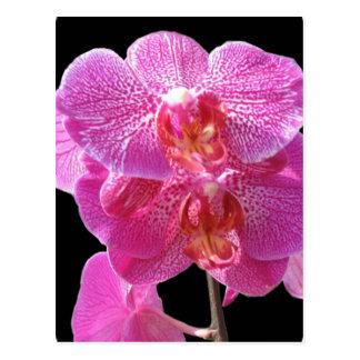 Postal rosada floreciente de las orquídeas