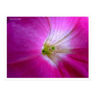 Postal rosada macra de la flor