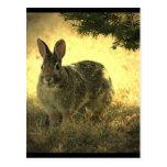 Postal salvaje de los conejos