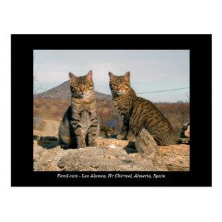 Postal salvaje de los gatos - Los Alamos Nr Chiriv