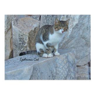 Postal salvaje del gato de Ephesus