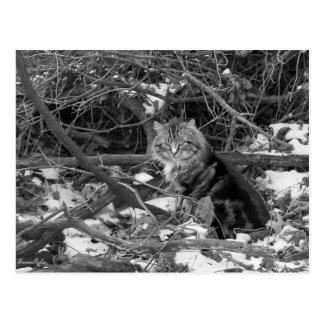 Postal salvaje del gato del bosque del invierno