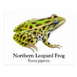 Postal septentrional de la rana de leopardo