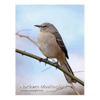 Postal septentrional del Mockingbird