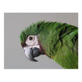 Postal severa del Macaw
