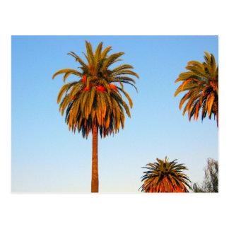 Postal soleada de las palmeras de California