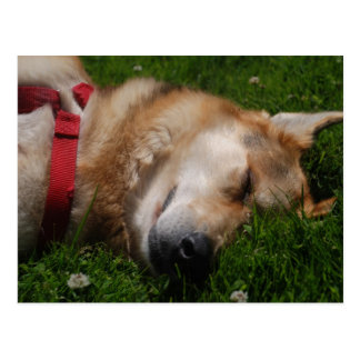 Postal soñolienta de la belleza del perrito