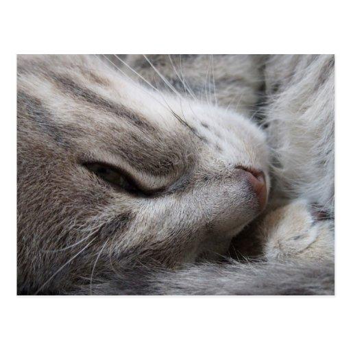 Postal soñolienta del gato