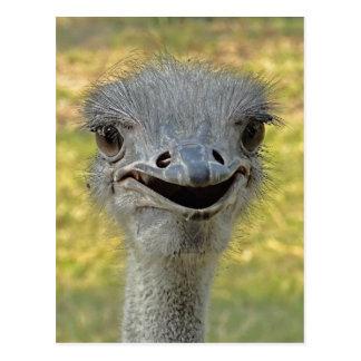 Postal sonriente 2 de la avestruz