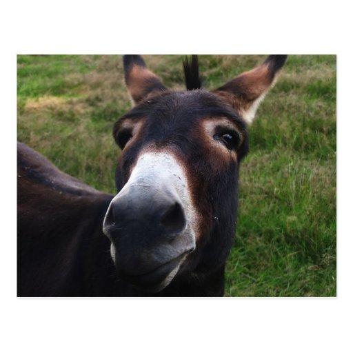 Postal sonriente del burro