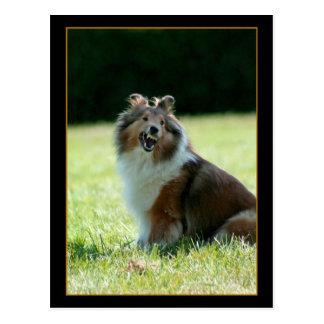 Postal sonriente del perro pastor de Shetland