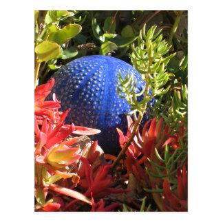 Postal subacuática del espacio en blanco del jardí