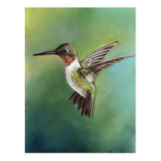 Postal Throated de rubíes del arte del colibrí