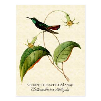 Postal Throated verde del arte del colibrí del
