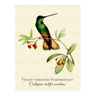 Postal Throated violeta del arte del colibrí