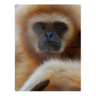 Postal triste del Gibbon