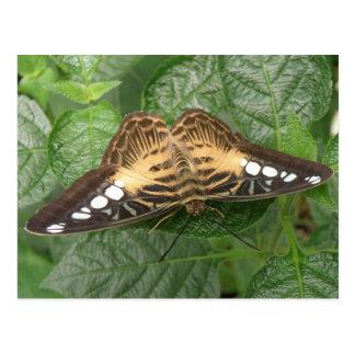 Postal tropical bonita de la mariposa de las podad