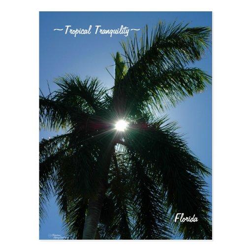 Postal tropical de la Florida de la tranquilidad