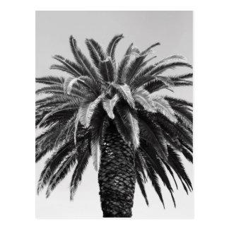 Postal tropical de la palmera