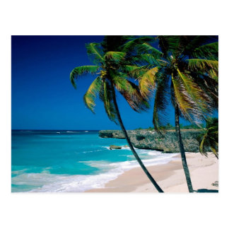 Postal tropical de la playa del palmtree del paraí