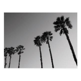 Postal tropical de las palmeras