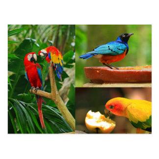 Postal tropical de los pájaros
