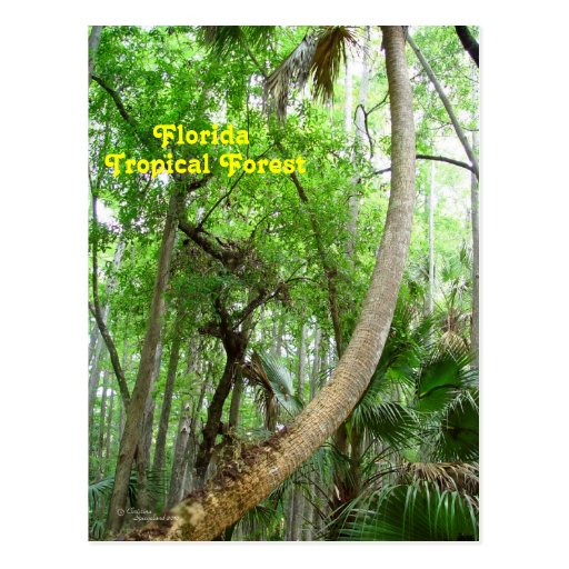Postal tropical del bosque del interruptor la
