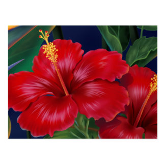 Postal tropical del hibisco del paraíso