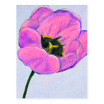 Postal: Tulipán rosado