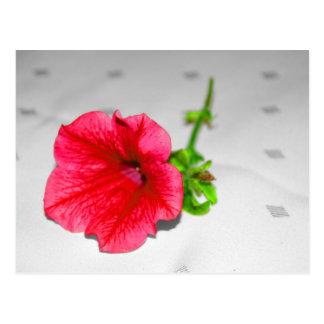 Postal - una flor roja - Blume de memoria