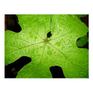 Postal verde clara de la hoja de la uva