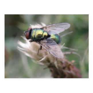Postal verde de la macro de la mosca de la botella