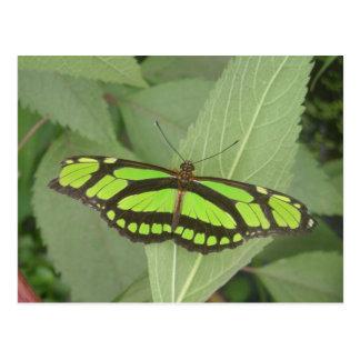 Postal verde de la mariposa de la malaquita