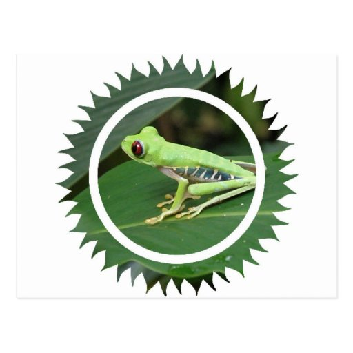 Postal verde de la rana arbórea de Red Eye