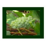 postal verde de las uvas